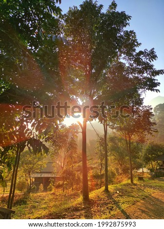 the morning sun is covered by shady trees