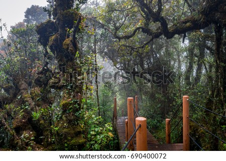 The mossy forest in Malaysia is the oldest rain forest in the world