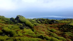 The mossy lava fields of Southern Iceland created during the Laki eruption in the late 18th century