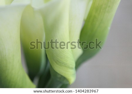 The most beautiful and elkful picture of calla in the world.