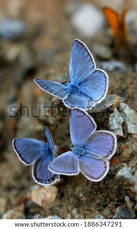 The most beautiful are blue butterflies. Сток-фото ©