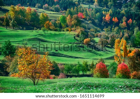The most beautiful colors of autumn in Savsat Artvin Сток-фото ©