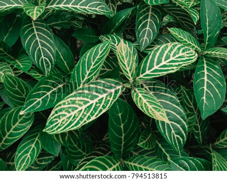 The most beautiful leaves - Shutterstock ID 794513815