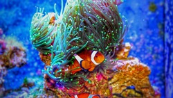 The most popular fish in saltwater reef aquariums