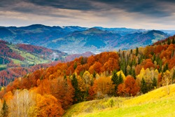 the mountain autumn landscape with colorful forest