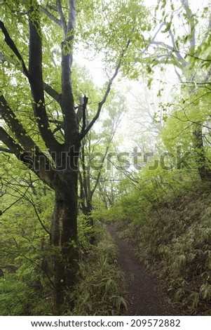 The Mountain Path Of The Beech Forest #209572882