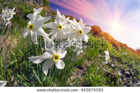 Free photos white mountain flower among the rocks avopix the mountain system marmarosh ukrainian alps at high altitudes among rocks and rhododendron wasteland grow mightylinksfo