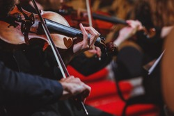 The musician plays the violin in the orchestra