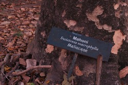The nameplate contains information about the mahogany tree. The name board reads