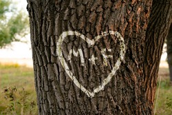 the names of peopel who love each other in the shape of heart carved on the tree