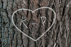 the names of people who love each other in the shape of heart carved on the tree