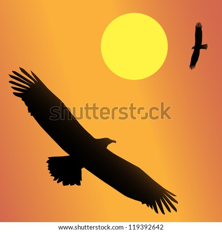 The national bird of the United States, the Bald Eagle