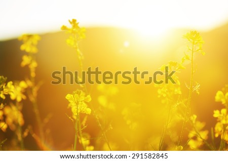 the natural floral background, yellow wildflowers