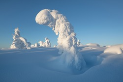 The natural scenery in winter, a popular travel destination in Europe, the forest natural scenery in Finnish Lapland.