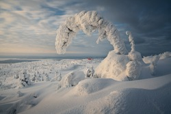 The natural scenery in winter, a popular travel destination in Russia, the forest natural scenery of Murmansk.