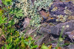 The Natural stone texture, big dark brown rock. Natural background. moss and lichens on the rocks