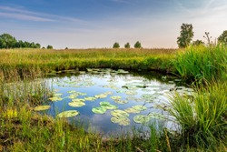 the Netherlands - Schraalland near De Meije Bodegraven. Pond with water lillies and rich grasslands. Polder  Oerlandschap Wetlands Biodiversity