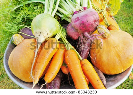The new harvest. Many different vegetables lie in the garden cart