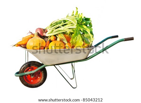 The new harvest. Many different vegetables lie in the garden cart. Isolated on white background