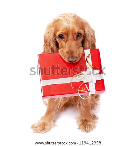 The nice dog is holding a present with the bow