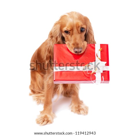 The nice dog with the present