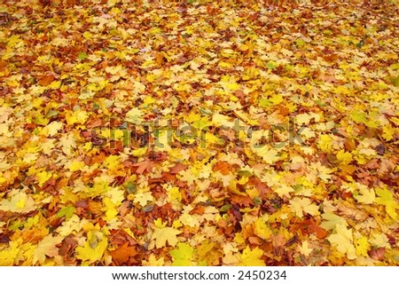 The nice golden leaves in the autumn park