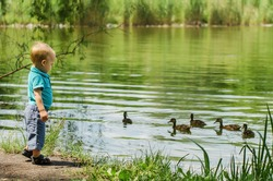 the nice little boy standing on the bank of the lake and looking at floating ducks