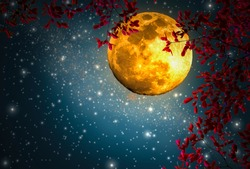 The night sky is romantic, with a large orange moon and Red leaf, floating beautifully, looking like one of the fairy tale scenes,Elements this image furnished by NASA (manipulation)