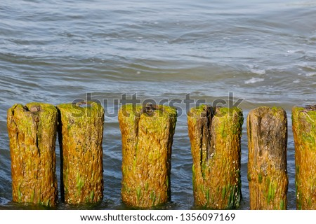 The old breakwater near the Baltic Sea is overgrown with algae. These wooden breakwaters still serve to protect the coast against the sinister effects of destructive sea waves in Kolobrzeg in Poland #1356097169