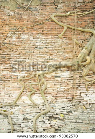 The old brick wall and tree roots background (ruins of Ayutthaya, old capital of THAILAND)
