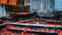 The old Catholic cemetery in the fall. Abandoned graves under a layer of fallen leaves. Stone steps and a bench in front of the entrance to the crypt