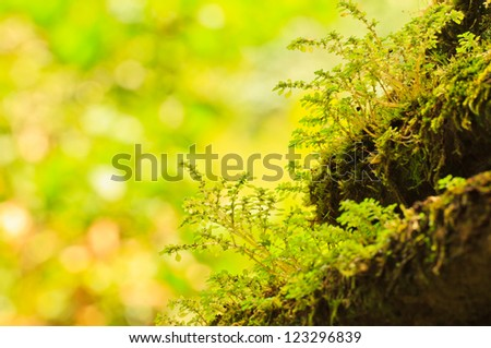 The old concrete   abstract texture and green moss. - stock photo