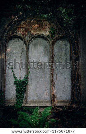 The Old Jewish Cemetery in Wroclaw, formerly known as Breslau, Poland. Background for halloween design and text #1175871877