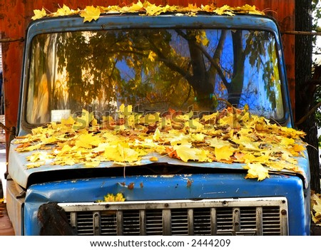 The old lorry in fallen down leaves of a maple