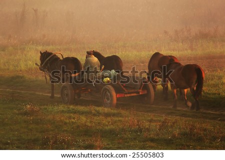 The old man with his four horses in the misty morning.