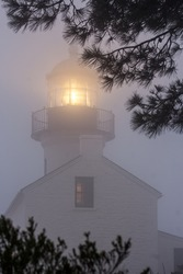 The Old Point Loma Lighthouse in the fog. Tree branches in the foreground.