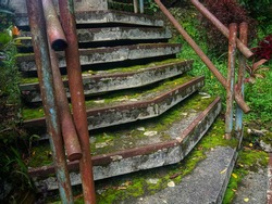 the old stairs are covered with moss