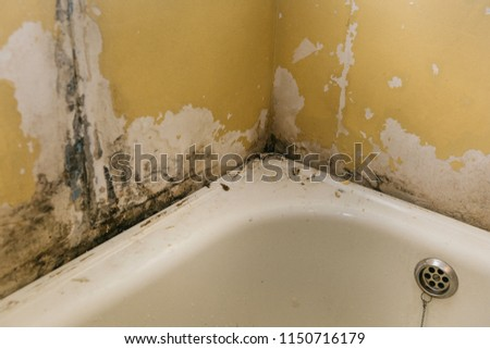 The old wall in the bathroom is covered with mold due to humidity in the room.
