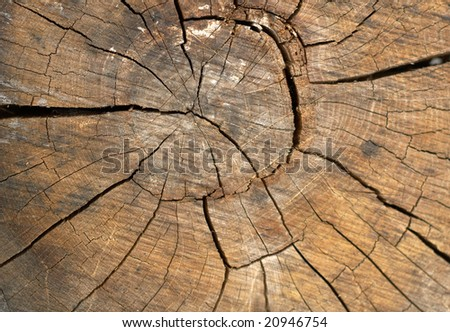 The Old Wood texture background