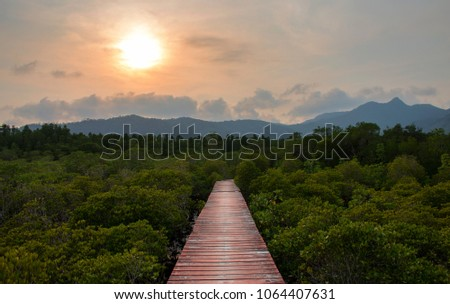 The old wooden walkway between mangrove under the sunshine with mountain background