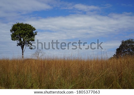 The one and only Savana in Thailand 'Thung Salaeng Luang National Park' Foto stock ©