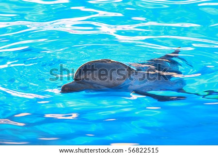 the one beautiful blue dolphin and water