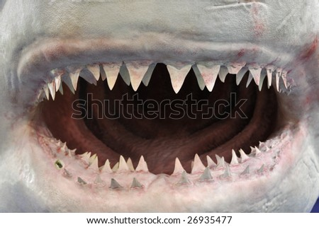 the open mouth of a shark model