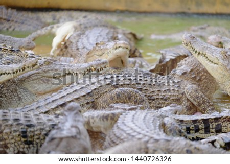 the open mouth of crocodile, wildlife in Medan, Indonesia #1440726326