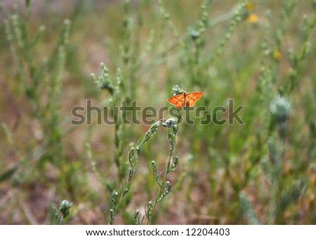 The orange butterfly sits on a grass - stock photo
