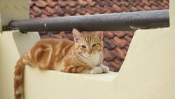 The orange cat getting rest in the balcony