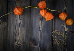 The orange physalis on a wood background