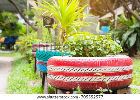 the organic plants were growth in the recycle painted tires in the garden Photo stock ©