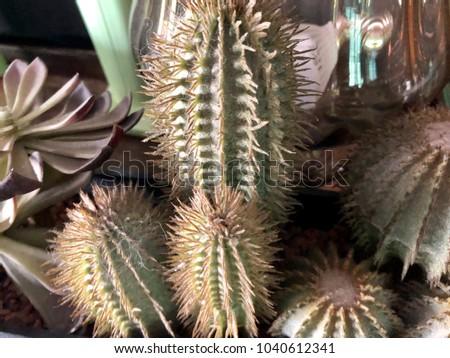 the ornamental flowers #1040612341