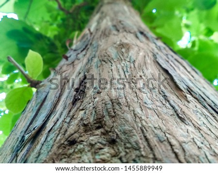 The outermost layers of stems and roots of wood plants (botany). #1455889949